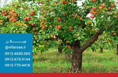 باغ ویلا بدون درخت میوه